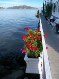Red geranium in boxes overlooking sea background. Narrow passage with white rails and flower boxes. Red geranium flowers and the San Francisco Bay as background Royalty Free Stock Photos