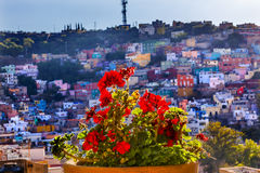 Red Geranium Many Colored Houses Guanajuato Mexico. Red Geranium Many Colored Orange Blue Red Houses of Guanajuato Mexico stock image