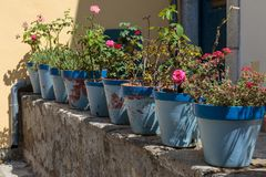 Red Geranium and Pink Roses Flowers: Plants inside Blue Vases Royalty Free Stock Photography