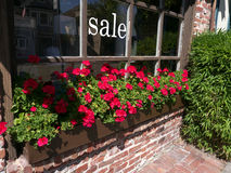 Red geranium in windowsill of a shop. Big sale sign painted in white on the glass Stock Photos