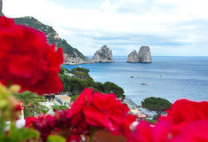 Red geraniums with Faraglioni in background, Capri island. Stock Images
