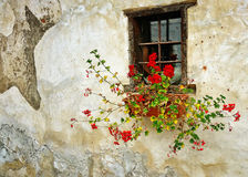 Red geraniums in planter on old ragged wall. Red geraniums are grown in window rectangular plastic planter on facade of old house with ragged wall stock images