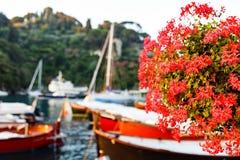 Red geraniums at Portofino harbor Royalty Free Stock Photography