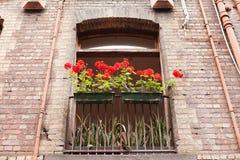 Red Geraniums Royalty Free Stock Photos