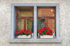 Red geraniums in window box Stock Images