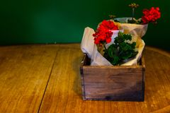 Red Geraniums wrapped in paper in a vintage wooden box on the old wooden table stock photography