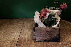 Red Geraniums wrapped in paper in a vintage wooden box on the old wooden table stock images