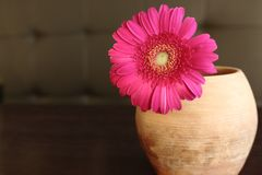 Red gerber daisy in clay flower pot on table. Beautiful home decoration. Bright blossom flower Stock Image