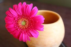 Red gerber daisy in clay flower pot on table. Beautiful home decoration. Bright blossom flower Stock Photography