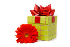 Red gerber flower and gift box Royalty Free Stock Images