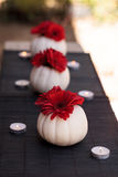 Red gerbera daisies in carved white Casper pumpkins Royalty Free Stock Photos