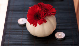 Red gerbera daisies in carved white Casper pumpkins Royalty Free Stock Photography
