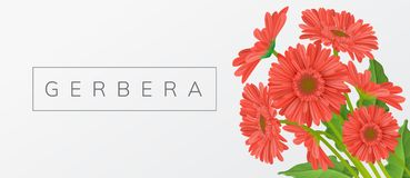 Red gerbera daisy flower frame. Red gerbera daisy flower bouquet with leaf, and text frame. Horizontal banner, vector illustration for spring and summer design Stock Image