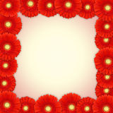 Red gerbera daisy frame Stock Image