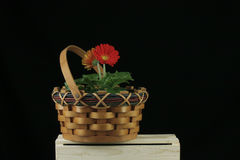 Red gerbera daisy in wicket basket. On black background Stock Photos