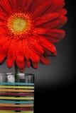 Red gerbera flower Stock Photography