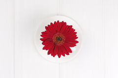 Red gerbera flower in cup and sauce on white wooden  background. Royalty Free Stock Photo