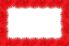 Red gerbera flower Stock Photos