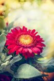 Red gerbera flower over blurred bokeh background Royalty Free Stock Photos