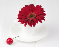 Red gerbera flower on white wooden background. Royalty Free Stock Images
