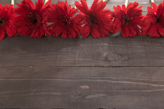 Red gerbera flowers are in the wooden background. Stock Photo