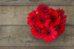 Red gerbera flowers Stock Photos