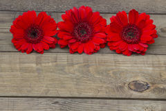 Red gerbera flowers Stock Photography