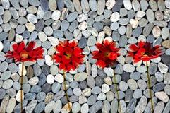 Red gerbera flowers, zen stones. Texture Royalty Free Stock Photo