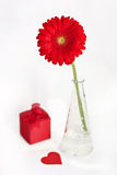 Red gerbera with gift Stock Photos