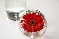 Red Gerbera in glass vase on the white surface of the table royalty free stock photography