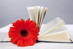Red gerbera lies on an open book Royalty Free Stock Photography
