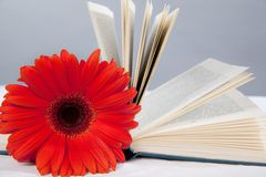 Red gerbera on the open book Stock Images