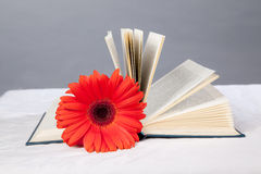 Red gerbera on the open book Stock Image