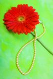 Red gerbera and pearl Stock Photography