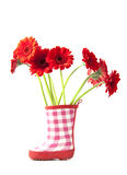 Red gerbera's Stock Photos