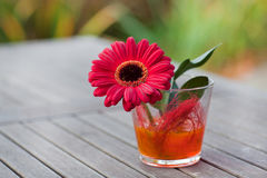 Red gerbera in a vase Stock Photography