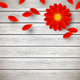 Red gerbera on wood Stock Images