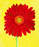 Red gerbera on yellow, watercolor Royalty Free Stock Photos