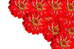 Red Gerberas grouped in the corner allowing free space for text. The close up of Red Gerberas grouped in the corner allowing free space for text royalty free stock photography