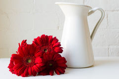 Red gerberas next to white jug Stock Images