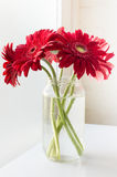 Red gerberas next to window Royalty Free Stock Photos