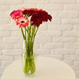 multi-colored gerberas in a vase on a white background stock photos