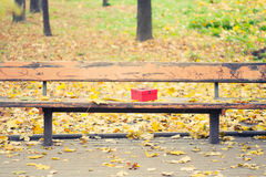 Red gift box on bench in autumn park Royalty Free Stock Image
