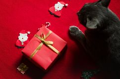 Red Gift Box and Cat. Flat lay of Christmas Decroration with Cat on Red Background royalty free stock photo