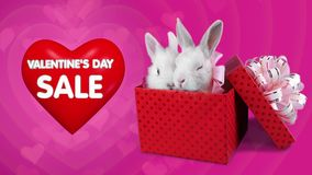 Red gift box with romantic couple of rabbits, Valentines day sale concept. Pink background stock video footage