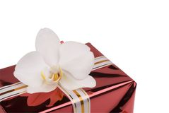 Red gift box with white orchid. Royalty Free Stock Photo