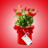 Red gift with  roses. Royalty Free Stock Photography