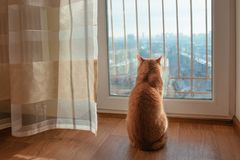 Red ginger cat watching throught the window outside to the cityscape in the sunny day. In winter Royalty Free Stock Images