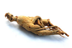 Red Ginseng Royalty Free Stock Image