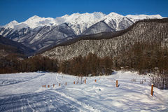 Red glade, Sochi Royalty Free Stock Photo
